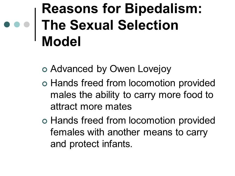 Reasons for Bipedalism: The Sexual Selection Model