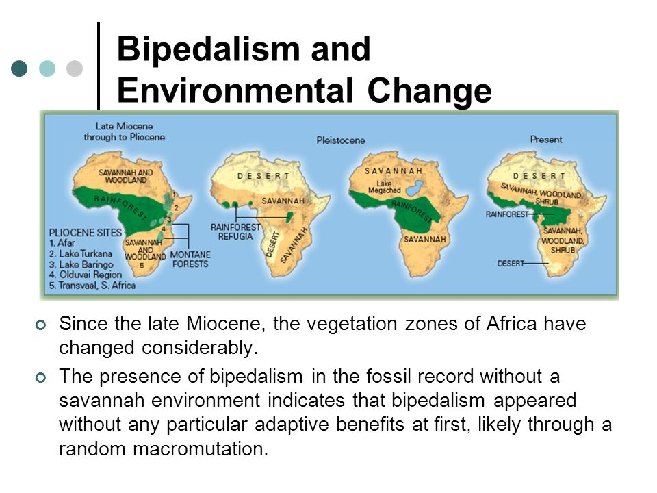 Bipedalism and Environmental Change