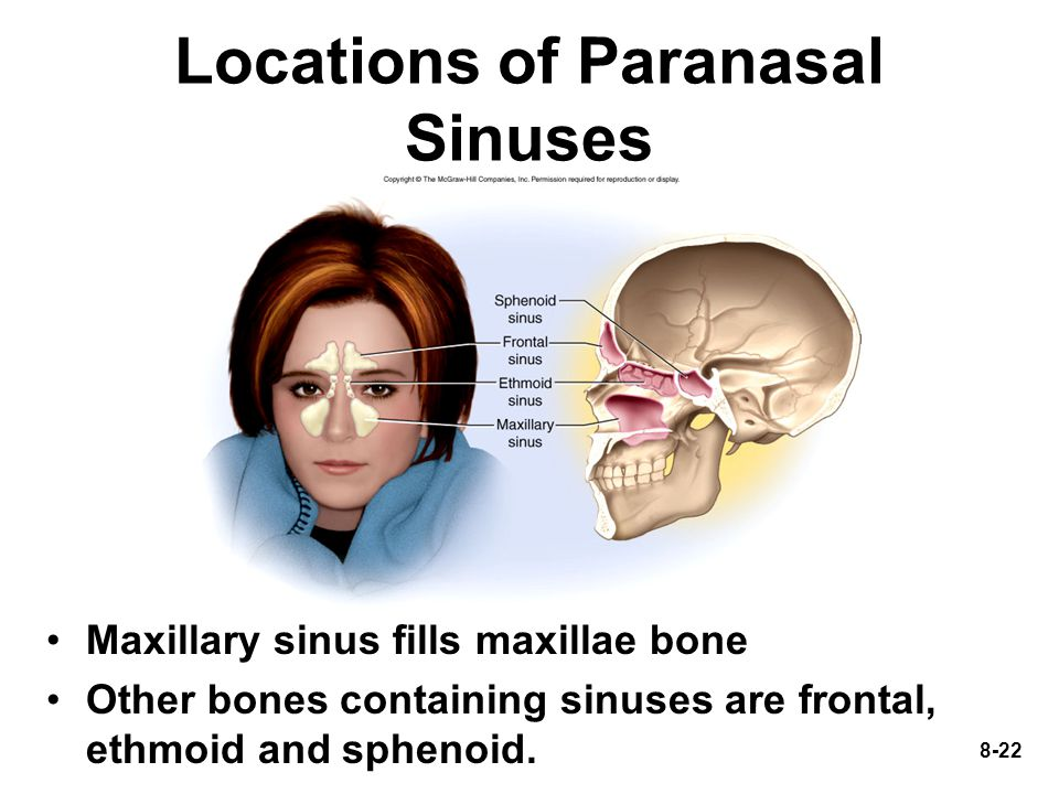 Locations of Paranasal Sinuses