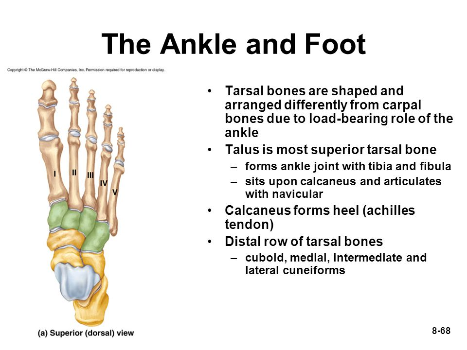 how to fix tarsal bone