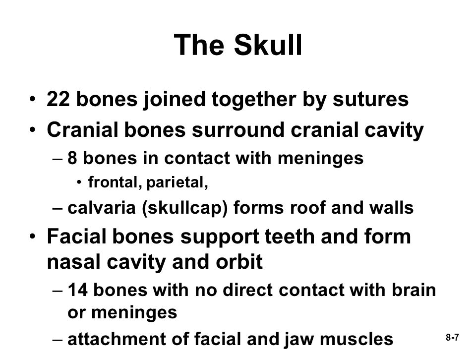The Skull 22 bones joined together by sutures