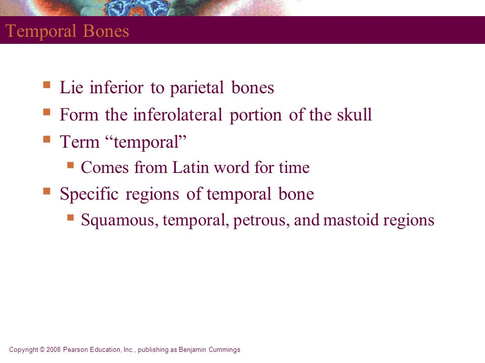 Lie inferior to parietal bones