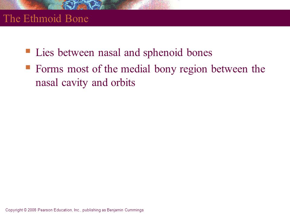 Lies between nasal and sphenoid bones