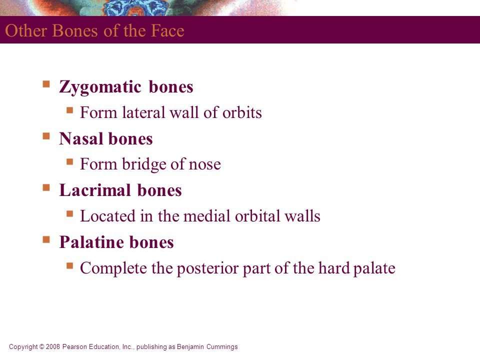 Other Bones of the Face Zygomatic bones Nasal bones Lacrimal bones
