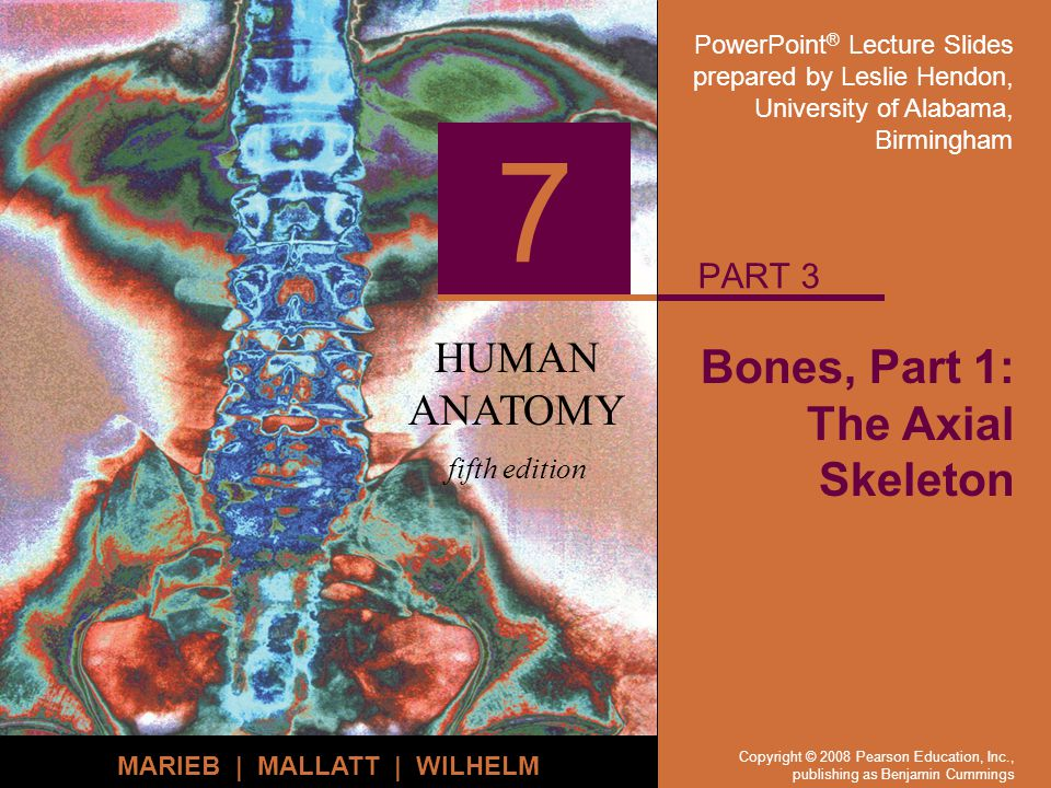 Bones, Part 1: The Axial Skeleton