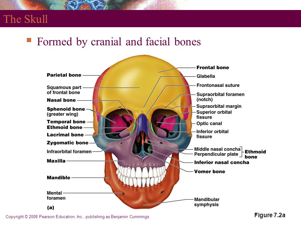 Formed by cranial and facial bones