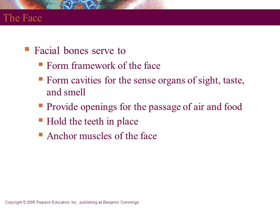 The Face Facial bones serve to Form framework of the face