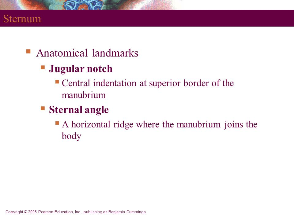 Sternum Anatomical landmarks Jugular notch Sternal angle