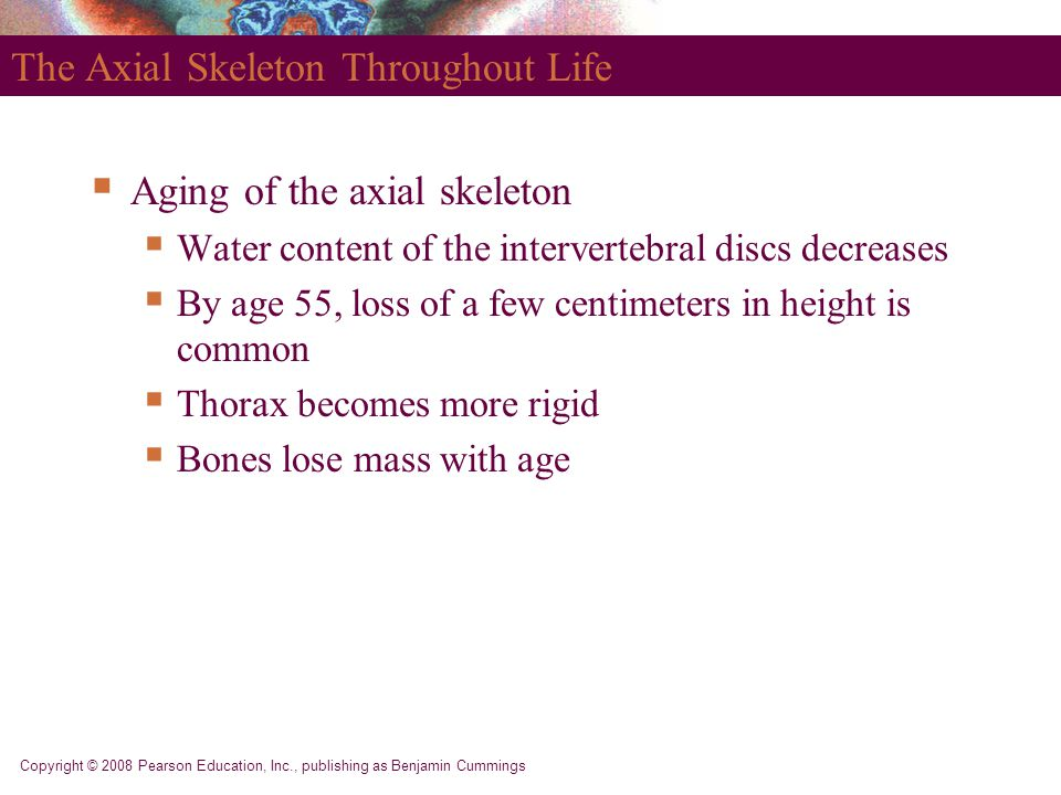The Axial Skeleton Throughout Life
