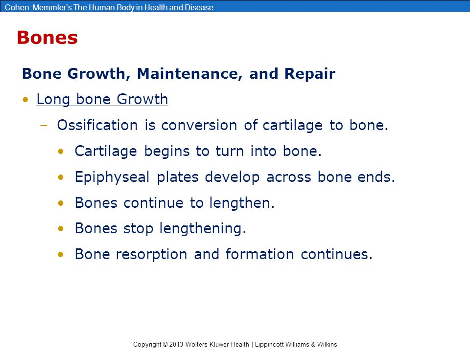 Bones Bone Growth, Maintenance, and Repair Long bone Growth