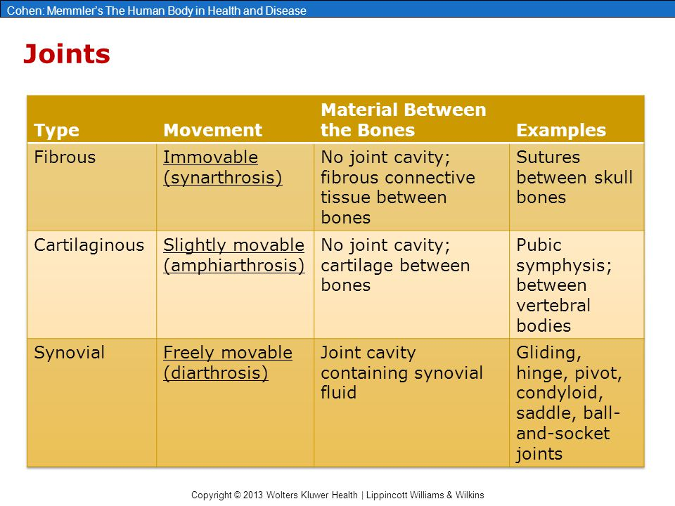 Joints Type Movement Material Between the Bones Examples Fibrous