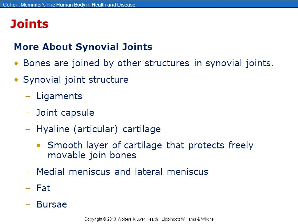 Joints More About Synovial Joints