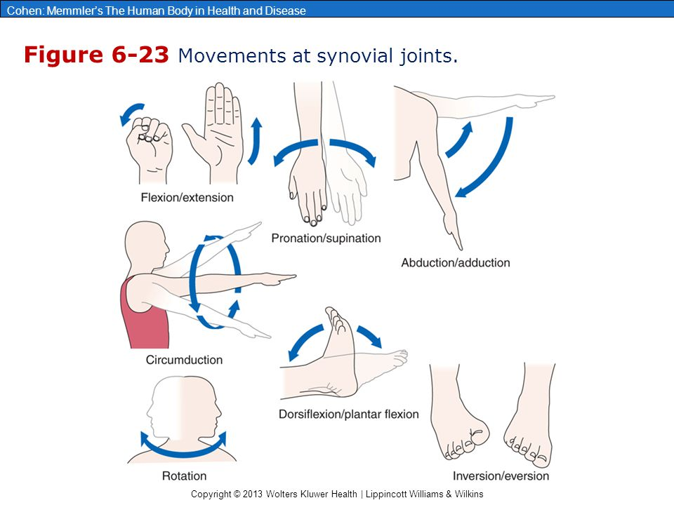 Figure 6-23 Movements at synovial joints.