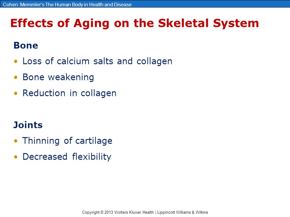 Effects of Aging on the Skeletal System