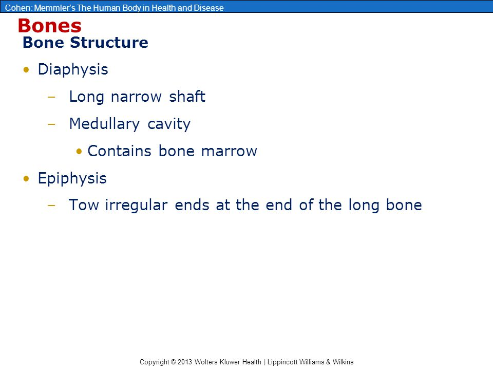 Bones Bone Structure Diaphysis Long narrow shaft Medullary cavity