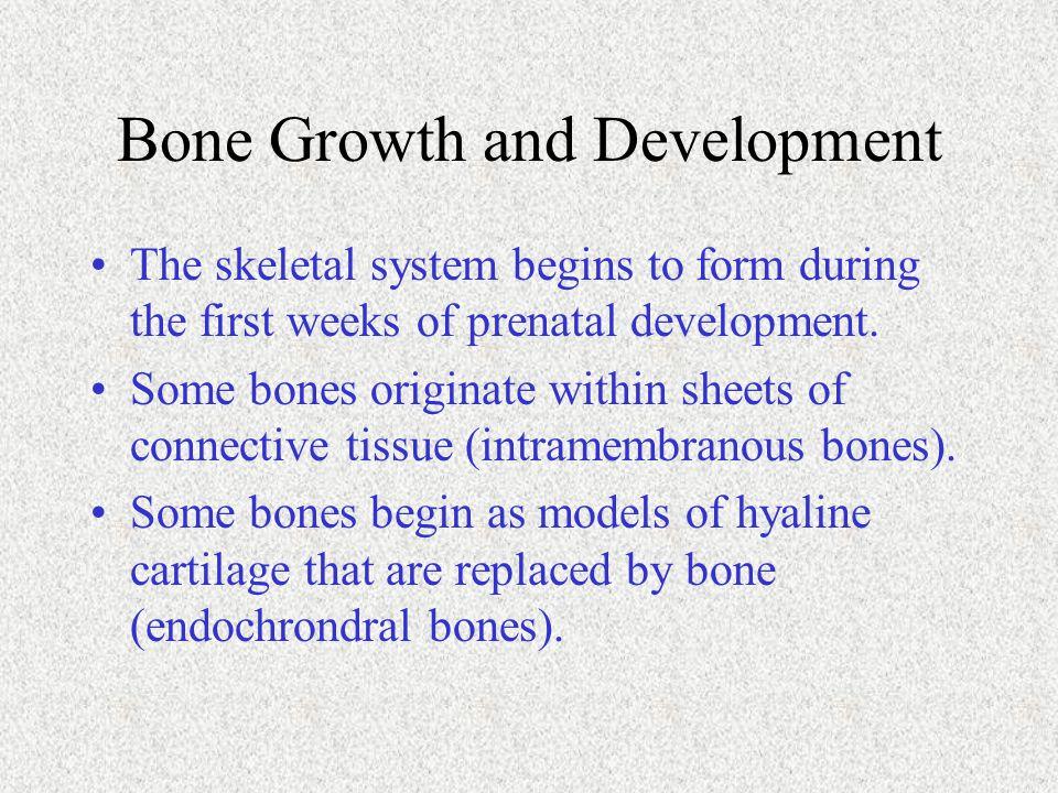 Bone Growth and Development
