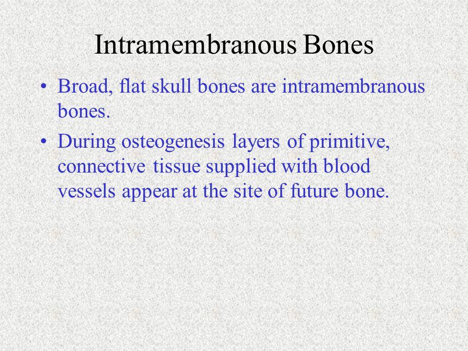 Intramembranous Bones