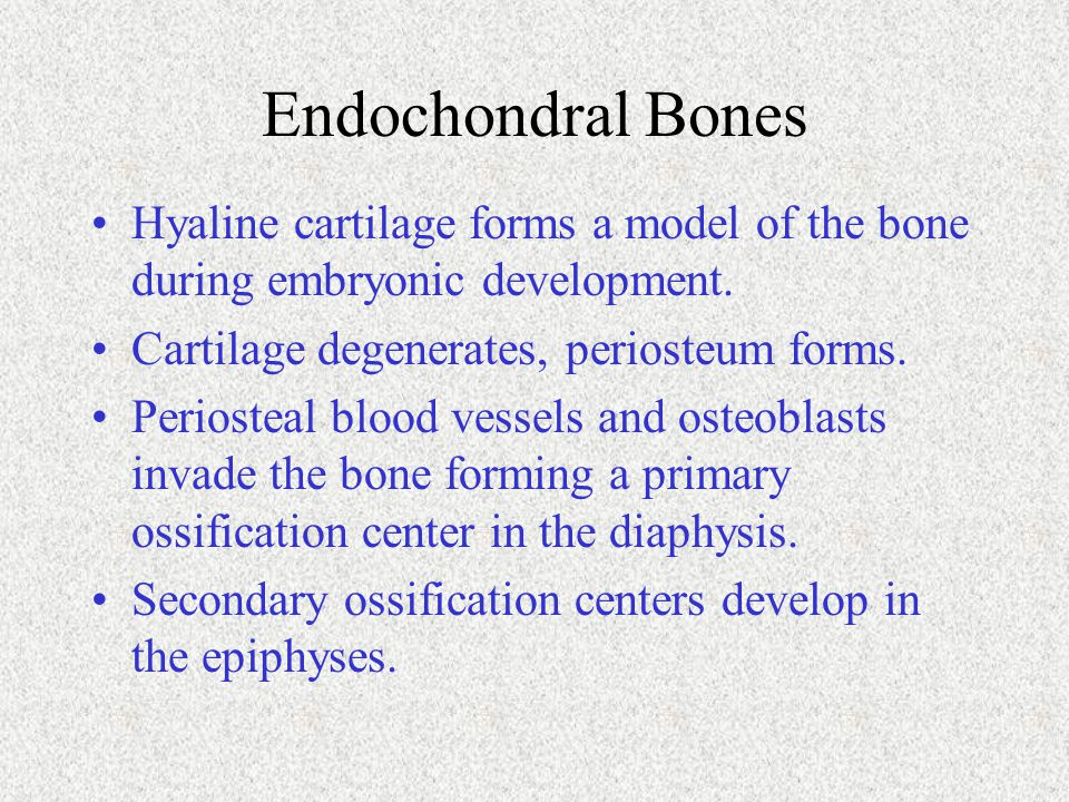 Endochondral Bones Hyaline cartilage forms a model of the bone during embryonic development. Cartilage degenerates, periosteum forms.