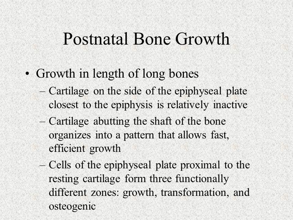 Postnatal Bone Growth Growth in length of long bones
