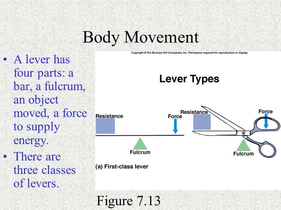Body Movement A lever has four parts: a bar, a fulcrum, an object moved, a force to supply energy. There are three classes of levers.