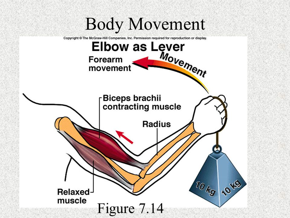 Body Movement Figure 7.14
