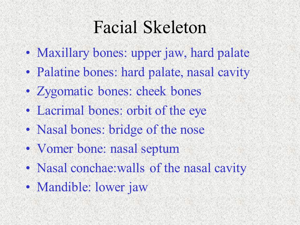 Facial Skeleton Maxillary bones: upper jaw, hard palate
