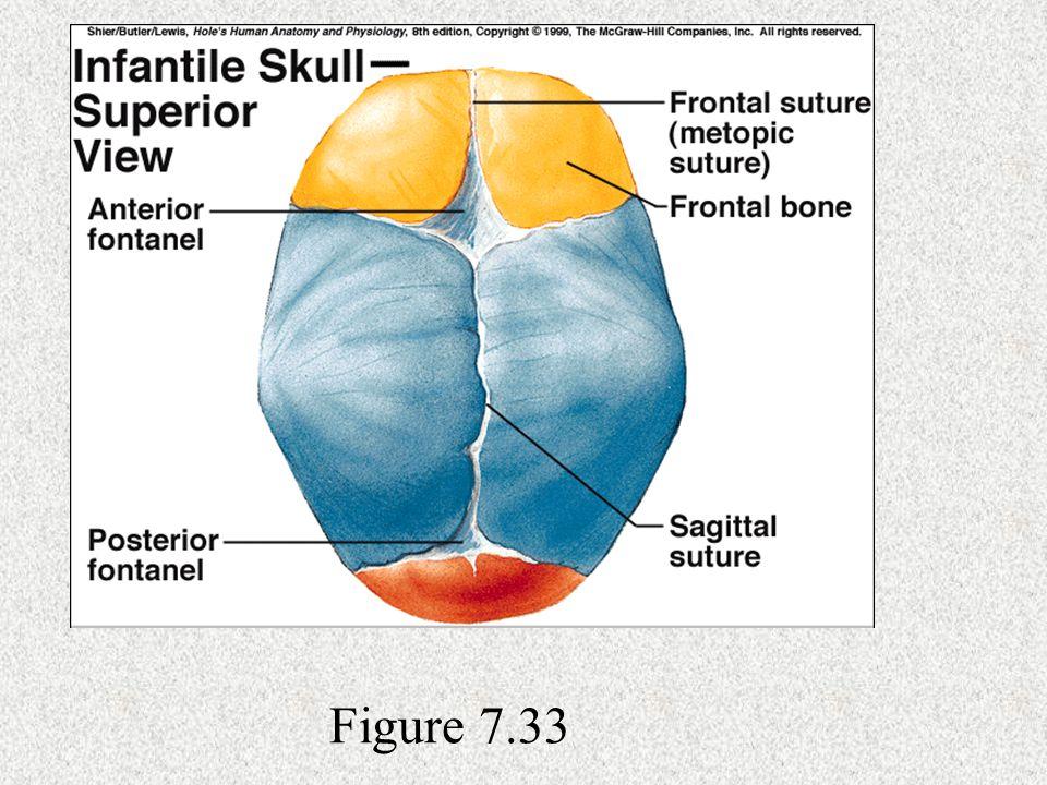 Figure 7.33
