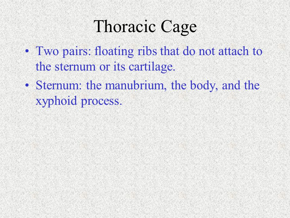 Thoracic Cage Two pairs: floating ribs that do not attach to the sternum or its cartilage.