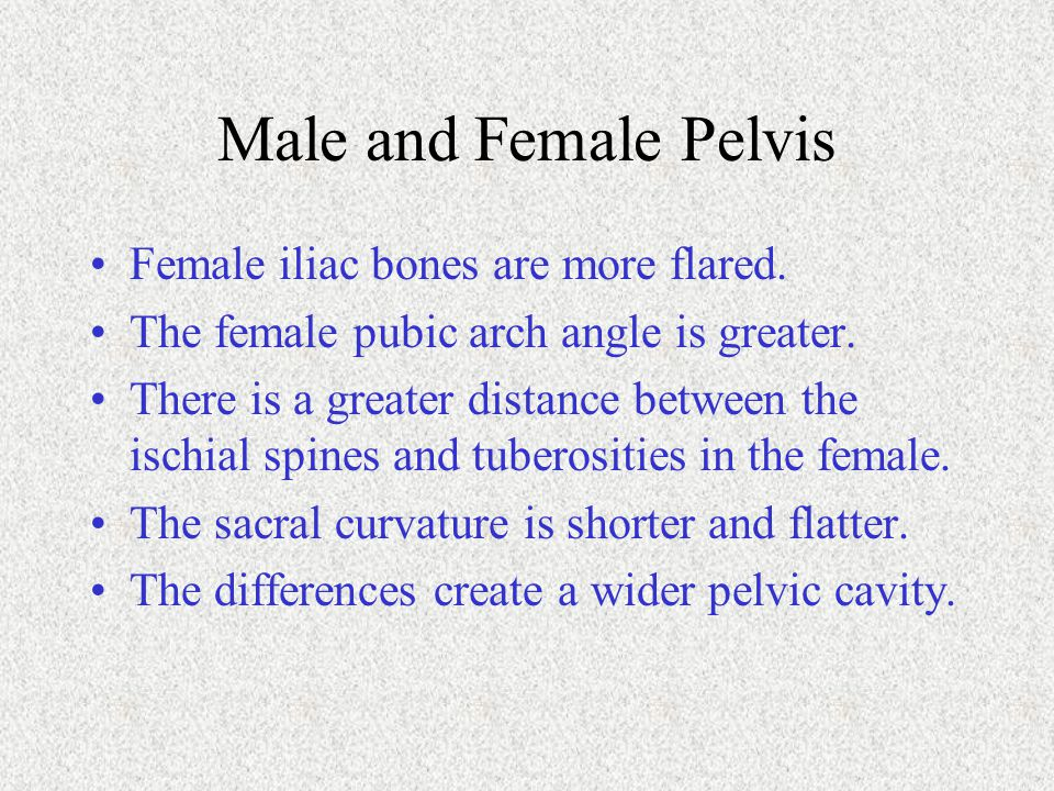 Male and Female Pelvis Female iliac bones are more flared.