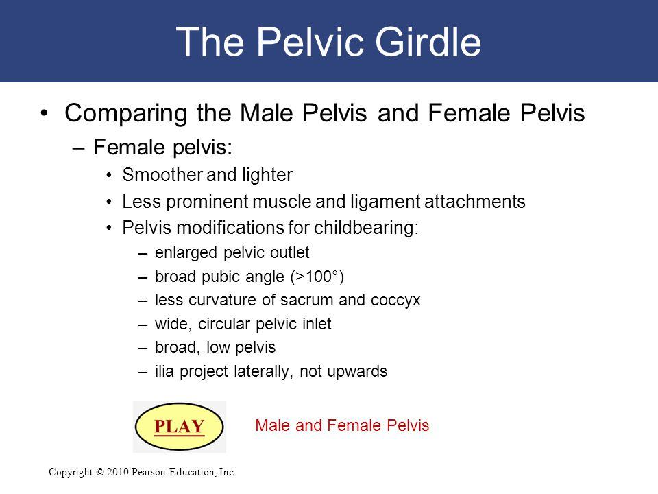 The Pelvic Girdle Comparing the Male Pelvis and Female Pelvis