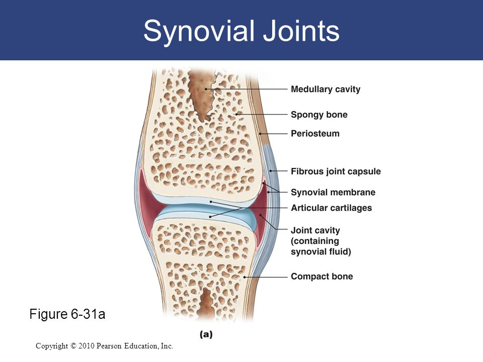 Synovial Joints Figure 6-31a