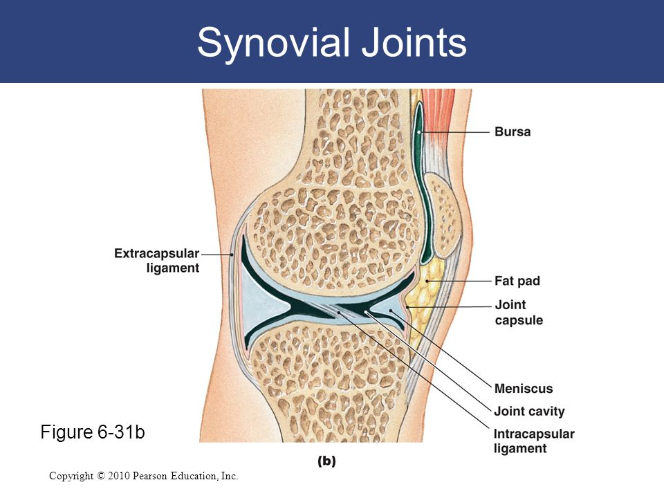 Synovial Joints Figure 6-31b