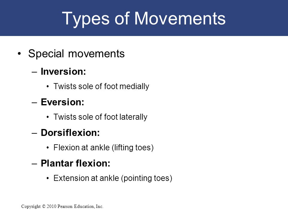 Types of Movements Special movements Inversion: Eversion:
