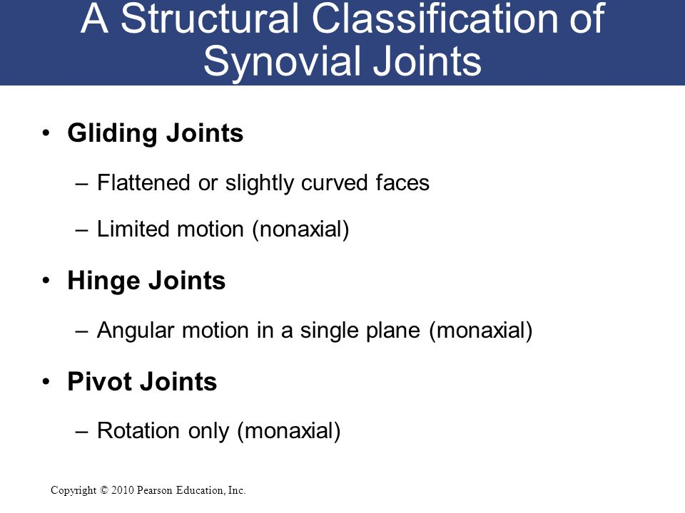 A Structural Classification of Synovial Joints