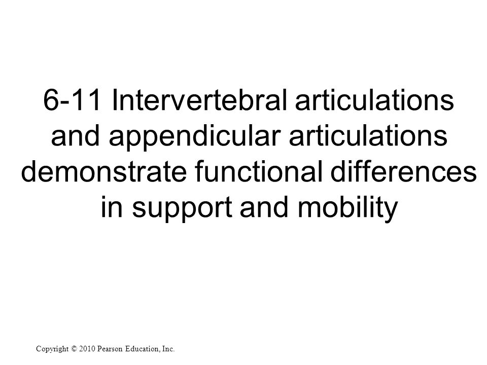 6-11 Intervertebral articulations and appendicular articulations demonstrate functional differences in support and mobility