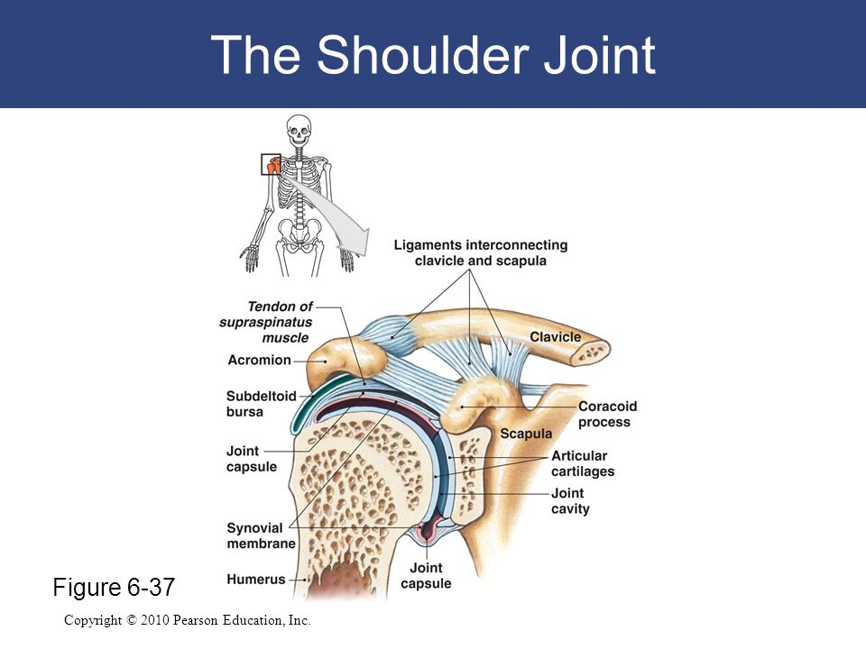 The Shoulder Joint Figure 6-37
