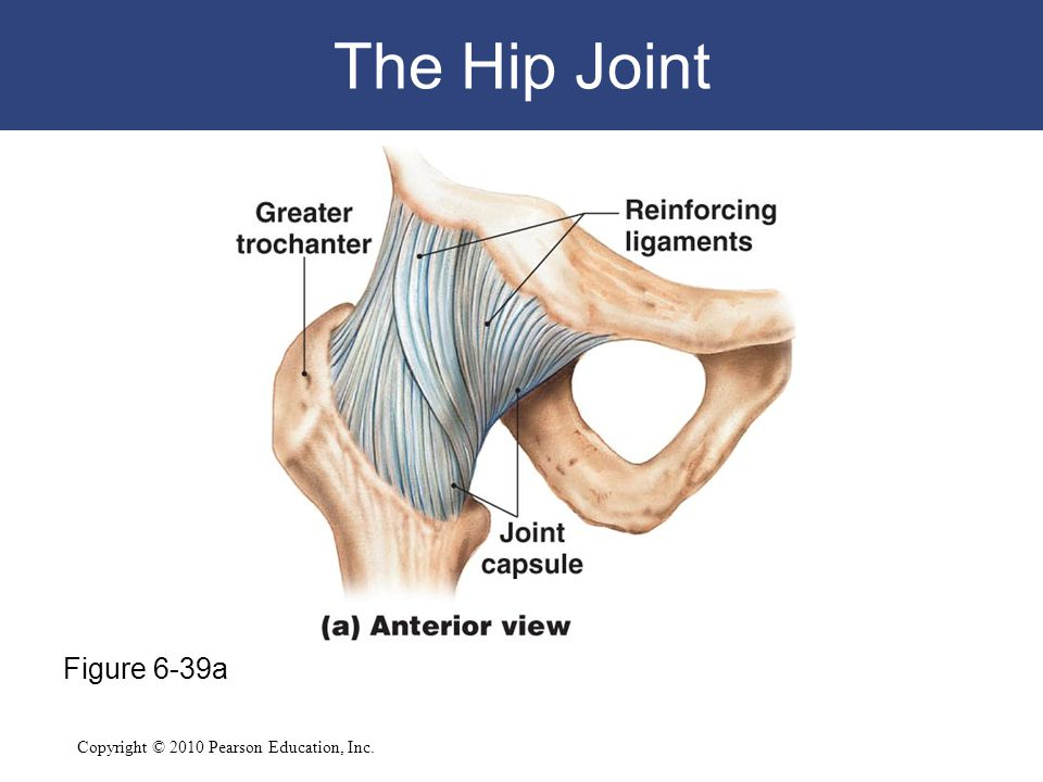 The Hip Joint Figure 6-39a