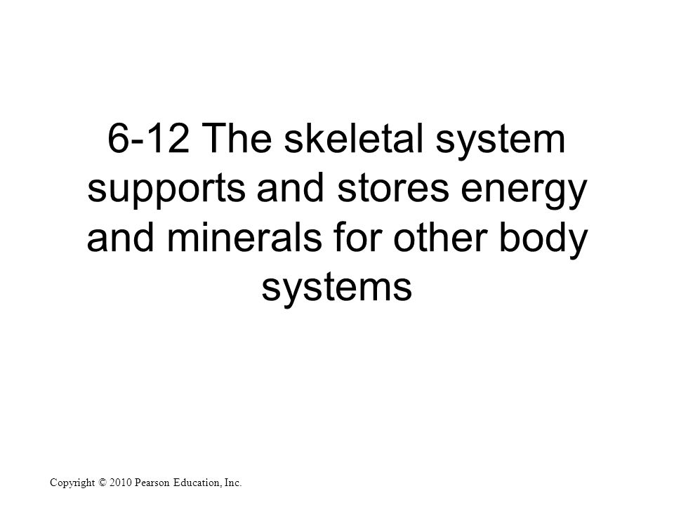 6-12 The skeletal system supports and stores energy and minerals for other body systems