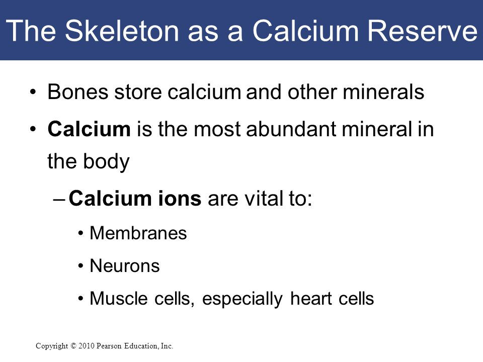 The Skeleton as a Calcium Reserve