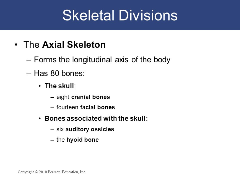 Skeletal Divisions The Axial Skeleton