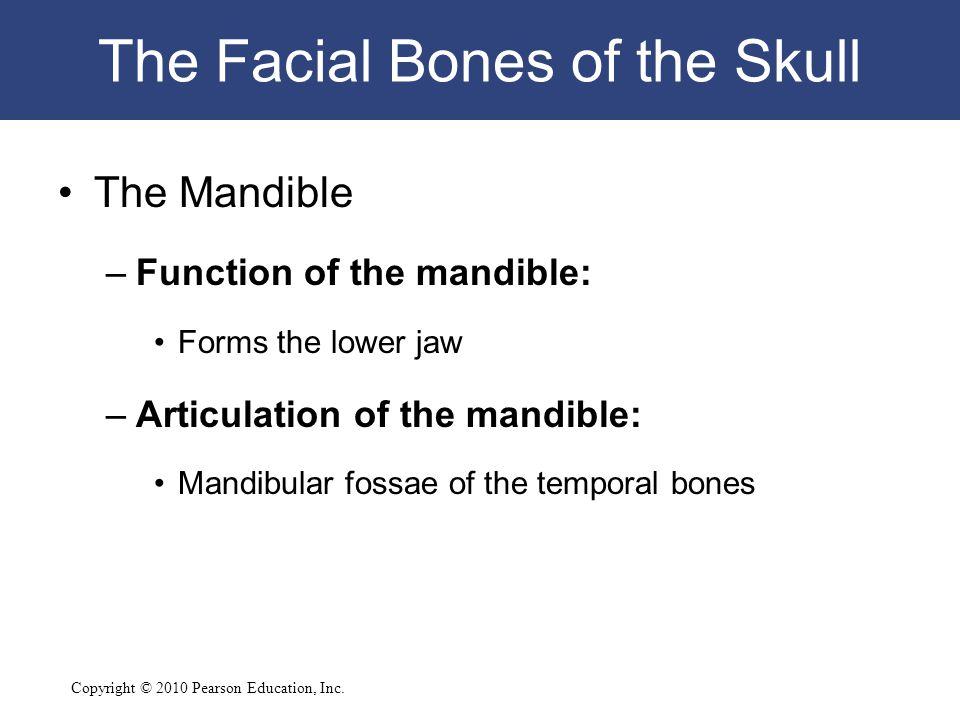 The Facial Bones of the Skull