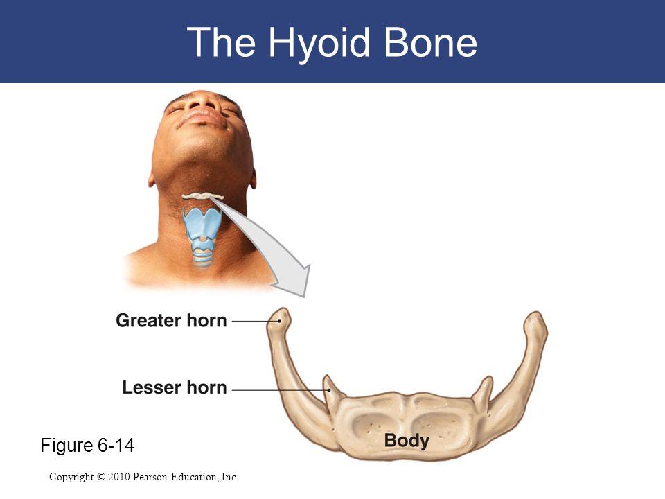 The Hyoid Bone Figure 6-14