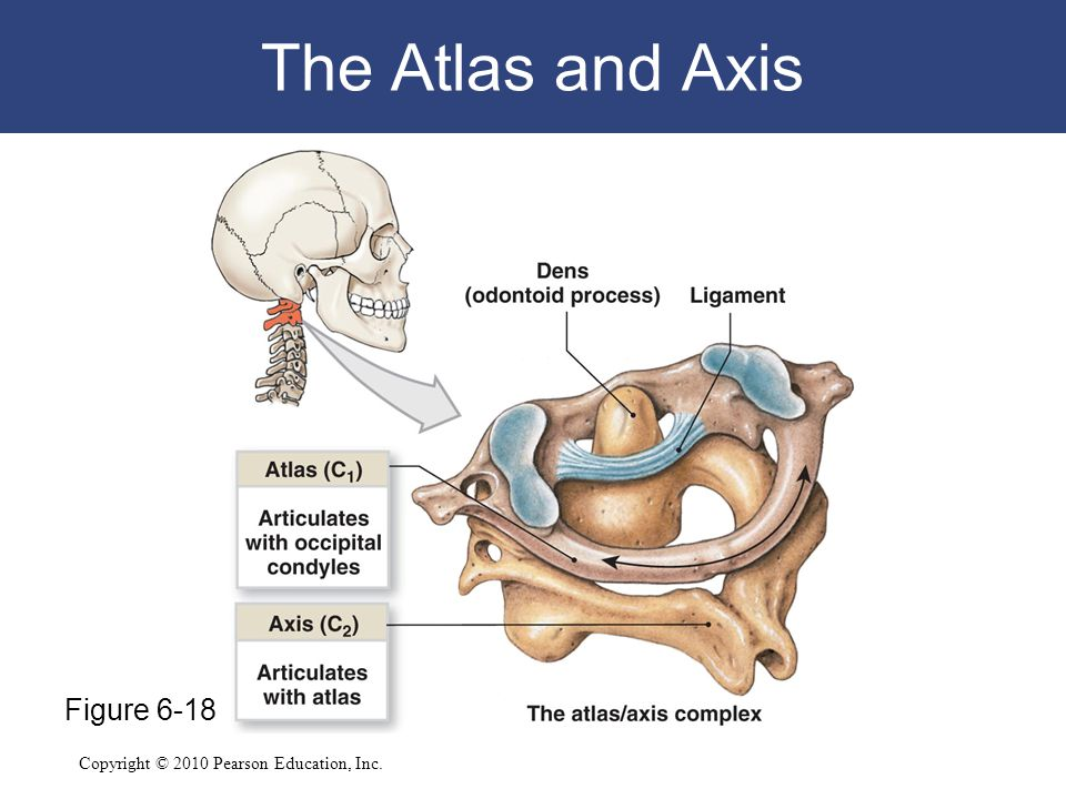 The Atlas and Axis Figure 6-18