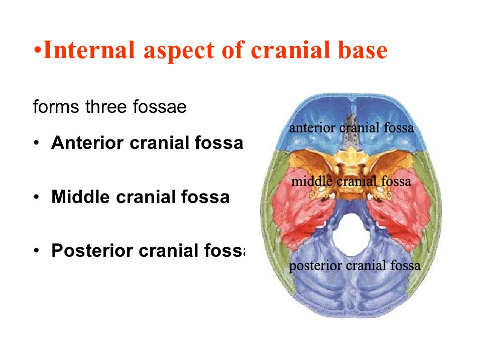 Internal aspect of cranial base