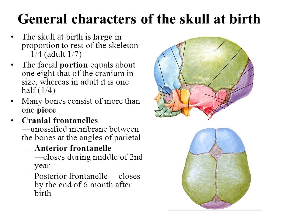 General characters of the skull at birth