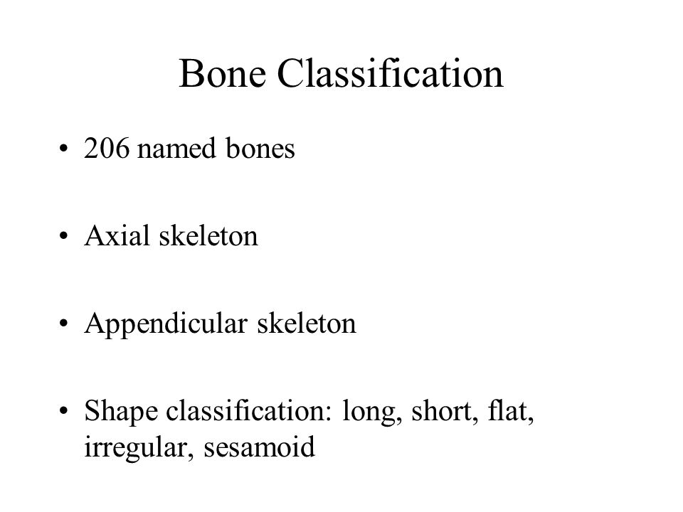 Bone Classification 206 named bones Axial skeleton