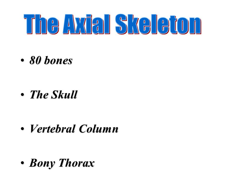 The Axial Skeleton 80 bones The Skull Vertebral Column Bony Thorax