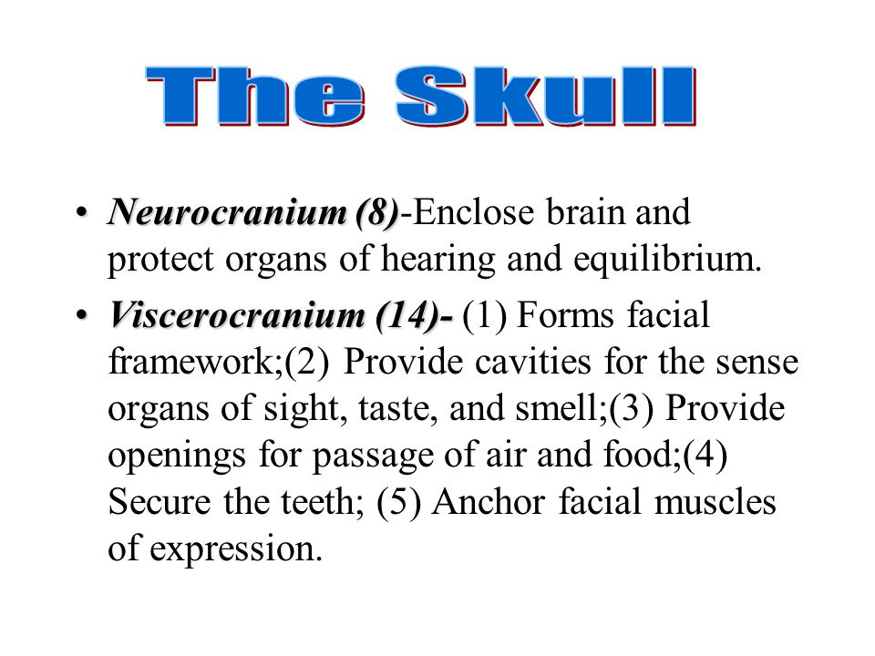 The Skull Neurocranium (8)-Enclose brain and protect organs of hearing and equilibrium.