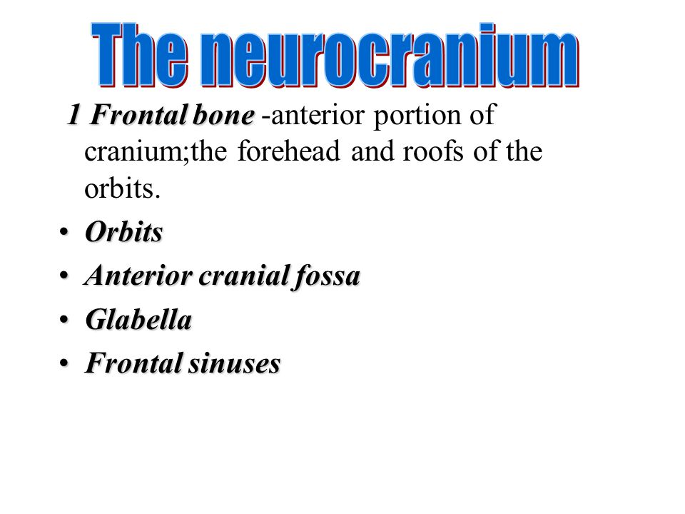 The neurocranium 1 Frontal bone -anterior portion of cranium;the forehead and roofs of the orbits. Orbits.