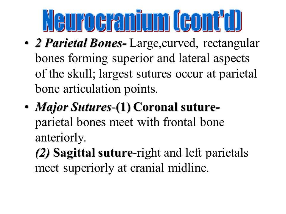 Neurocranium (cont d)